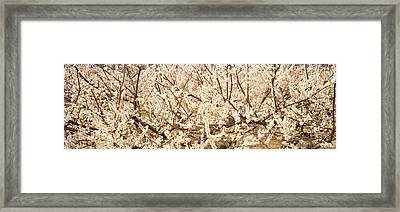 Close Up Of Flowering Cherry Tree Framed Print by Panoramic Images