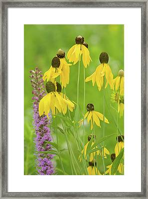 Close-up Of Flowers Blooming Framed Print by Panoramic Images