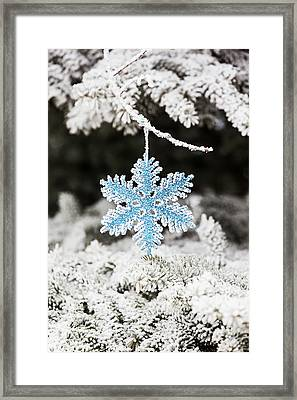 Close Up Of Frosted Covered Christmas Framed Print by Michael Interisano