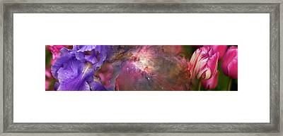 Close-up Of Galaxy With Iris And Tulips Framed Print by Panoramic Images