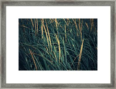 Close Up Of Grass Along Old Womens Bay Framed Print