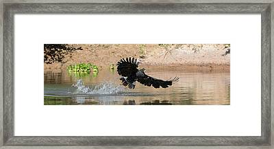 Close-up Of Hawk Fishing In River Framed Print by Panoramic Images