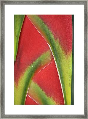 Close-up Of Heliconia, Costa Rica Framed Print