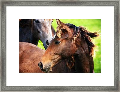 Close-up Of Horses Framed Print by Jan Brons