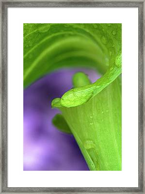 Close-up Of Jack-in-the-pulpit Framed Print