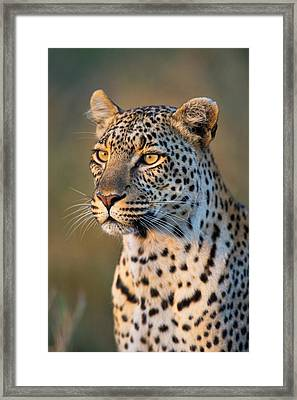 Close-up Of Leopard Panthera Pardus Framed Print by Panoramic Images