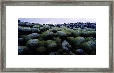 Close-up Of Moss On Rocks, Iceland Framed Print