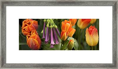 Close-up Of Orange And Purple Flowers Framed Print