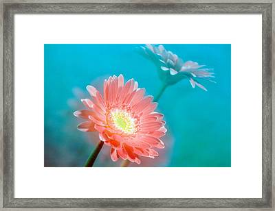 Close Up Of Pink And Lavender Flowers Framed Print