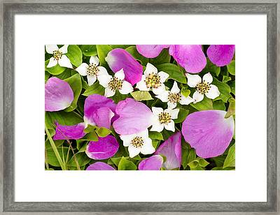 Close Up Of Prickly Rose Petals And Framed Print