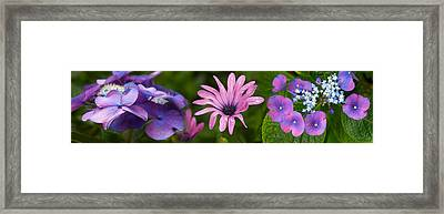 Close-up Of Purple Passion Flowers Framed Print