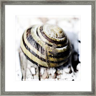 Close Up Of Sea Shell Framed Print by Tommytechno Sweden