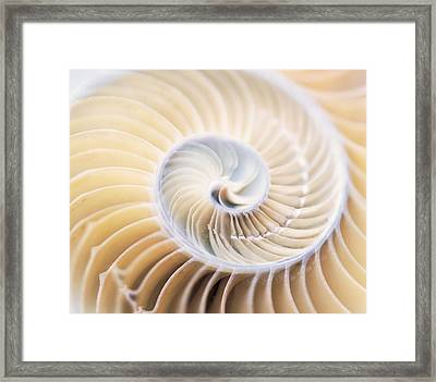 Close Up Of Shell Framed Print by Panoramic Images