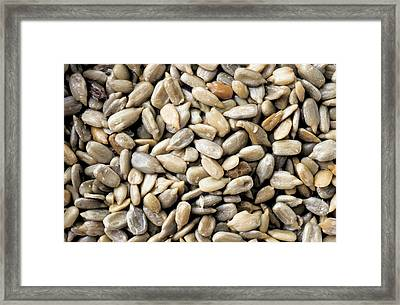 Close-up Of Sunflower Seeds Framed Print