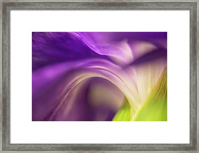Close-up Of The Back Of A Purple Framed Print by Rona Schwarz