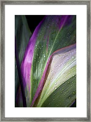Close Up Of The Purple And Green Leaves Framed Print by Scott Mead
