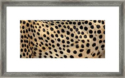 Close-up Of The Spots On A Cheetah Framed Print by Panoramic Images