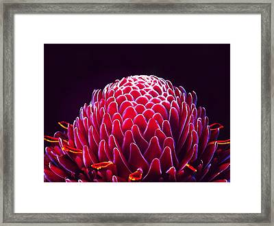 Close-up Of Torch Ginger Flower Against Framed Print by Laura Plank / Eyeem