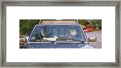 Close-up Of Two Dogs In A Pick-up Framed Print by Panoramic Images