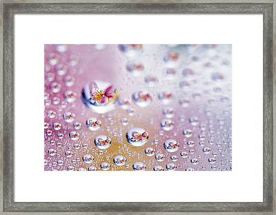 Close Up Of Water Droplets With Flower Framed Print by Panoramic Images