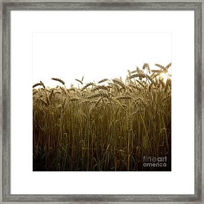 Close-up Of Wheat Ears. Framed Print by Bernard Jaubert