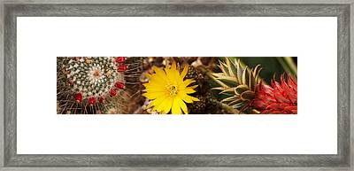 Close-up Of Wildflowers Framed Print by Panoramic Images