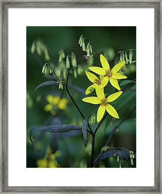 Close Up Of Yellow Mountain Wildflowers Framed Print