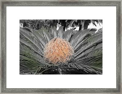 Close Up Palm Framed Print by Augusta Stylianou