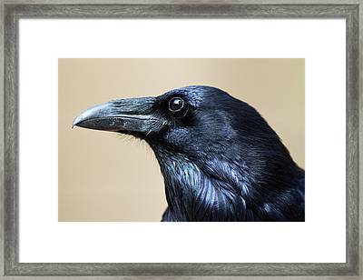 Close Up Portrait Of A Common Raven Framed Print by Marc Moritsch