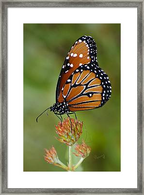Close-up Pose Framed Print