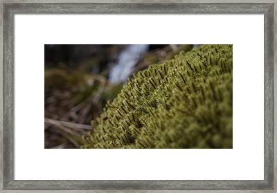 Close Up Framed Print by Riley Handforth