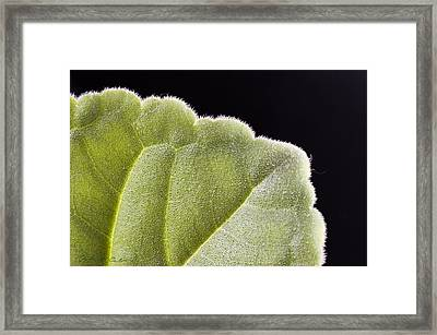 Close-up Texture Framed Print