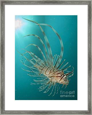 Close-up View Of A Lionfish, Gorontalo Framed Print by Steve Jones