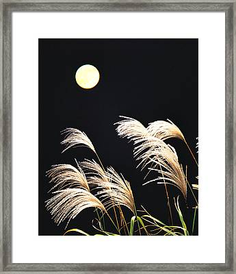 Close Up View Of Foxtail Grass Framed Print by Panoramic Images