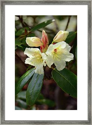 Close View Of A Flowering Branch Framed Print by Darlyne A. Murawski