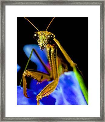 Closeup Macro Of The Praying Mantis Framed Print
