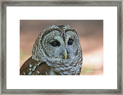 Closeup Of A Barred Owl  Framed Print