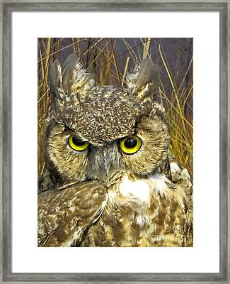 Closeup Of A Great Horned Owl Framed Print
