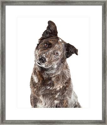 Closeup Of Australian Shepherd Mix Breed Dog Framed Print by Susan Schmitz