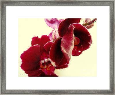 Closeup Of Flowering Burgundy Orchid Framed Print