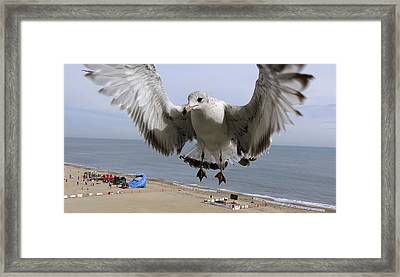 Closeup Of Hovering Seagull Framed Print