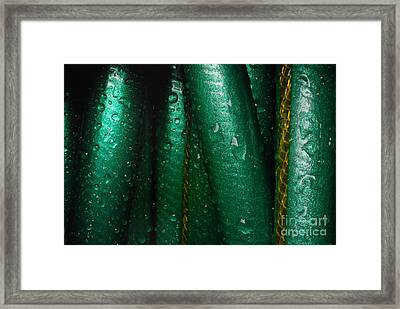 Closeup Of Wet Garden Hose Framed Print by Amy Cicconi