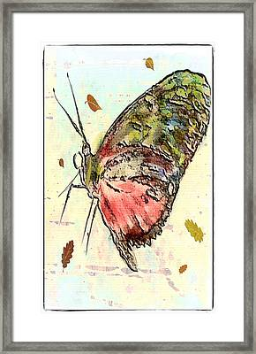 Cloud Butterfly Framed Print by Jill Balsam