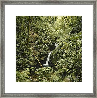 Cloud Forest Waterfall Framed Print