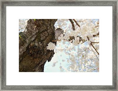 Cloud Of Petals Framed Print