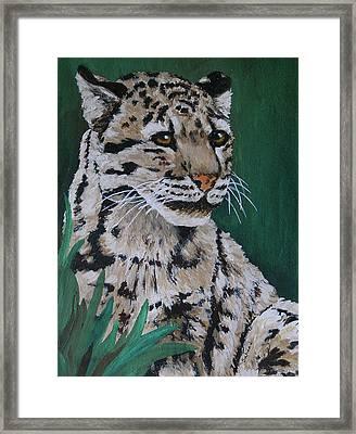 Clouded Leopard Framed Print by Margaret Saheed