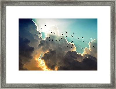 Clouds And Birds Framed Print by Dorothy Walker