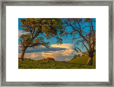 Clouds Between Trees Framed Print
