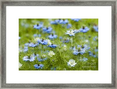 Clouds Of Blue Framed Print by Anne Gilbert