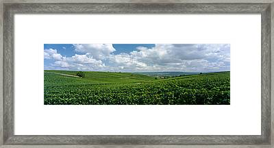 Clouds Over Vineyards, Mainz Framed Print by Panoramic Images